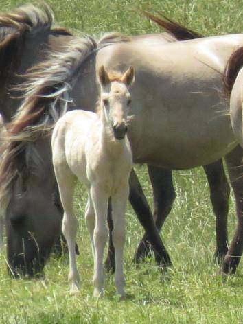 Linda L. Martin, Tarpan Horse Conservancy
