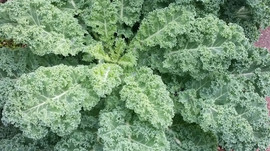 Recipe: Massaged Kale Salad