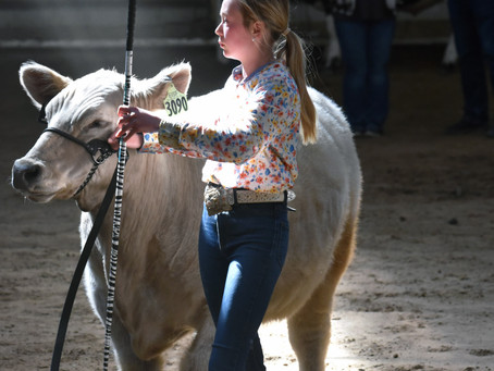 "COMMUNITY - ""USU Aggie Classic Steer and Heifer Show a success!"""