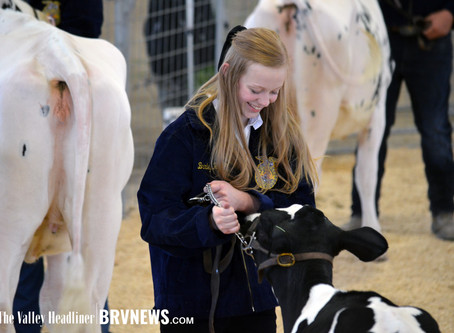 """COMMUNITY - """"From bucket calves to dairy heifers, the 2020 Box Elder Jr. Livestock show had it all"""""""