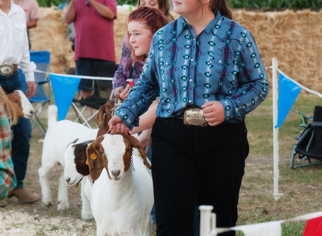 """COMMUNITY - """"Box Elder 'Not Fair' Goat Showmanship competition shines in the arena"""""""
