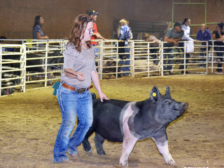 """COMMUNITY - """"It's about the kids; showmanship competition goes on"""""""