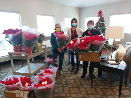 """COMMUNITY – """"A poinsettia for all"""""""