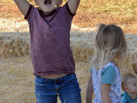 """COMMUNITY - """"Savoring the fall season at Ferry's Pumpkin Patch"""""""