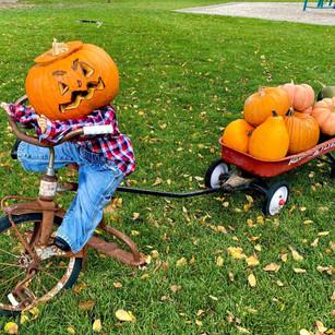 "COMMUNITY - ""Pumpkins, pumpkins everywhere! Annual Pumpkin Walk held at Shuman Park"""