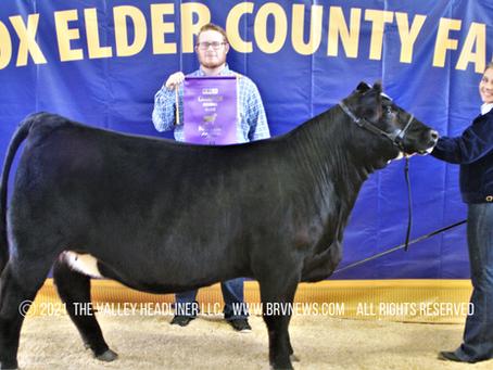 BOX ELDER COUNTY FAIR - 2021 BEJL Beef Heifer Show: Deweyville miss wins Champion and Reserve