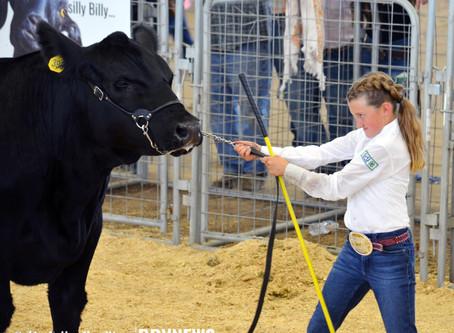 """NEWS - """"2020 Box Elder Jr. Livestock: Junior Market Steer results"""""""