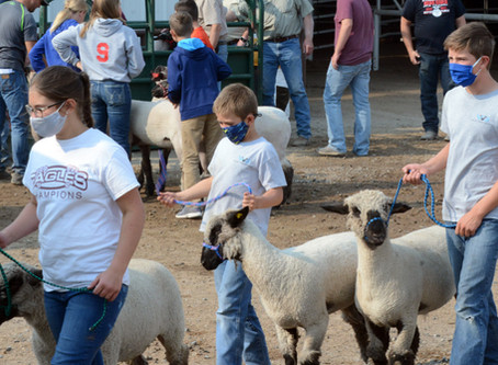 "COMMUNITY - ""Making weight; 2020 Box Elder Jr. Livestock lamb weigh-ins"""