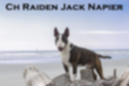 Ch Raiden Jack Napier March 2019.jpg