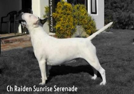 Ch Raiden Sunrise Serenade