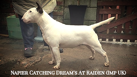 Napier Catching Dream's At Raiden (Imp U