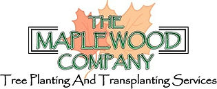 Maplewood Company, tree planting, transplanting, tree services, charlotte tree mover, tree mover