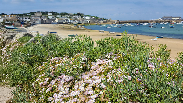 A festival in these Cornish islands only happens when the tide is out