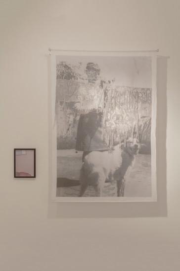 a cuidadora de Cães, (2017)