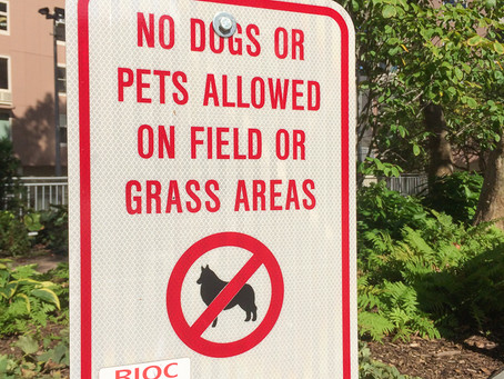 Time for RIOC to Enforce Our Dog Policies