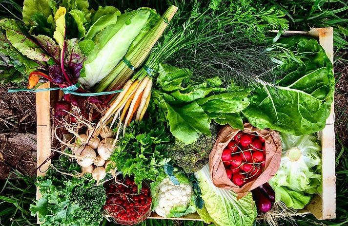 Panier légumes Agathe et Albert