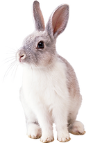 Bunny 1.png