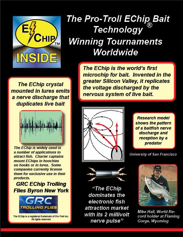 EChip Web Page.jpg
