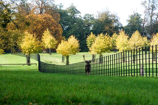 Deer Fencing - Parkland