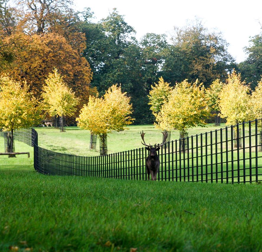 Deer Fence 1.jpg