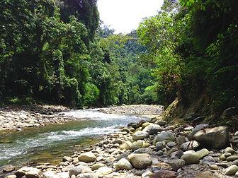 Sam's Bungalow Bukit Lawang