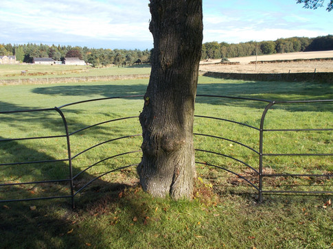 Curved Fence.JPG