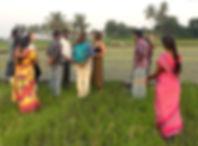 Riz Inde du Sud - I FEED GOOD