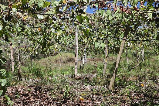 Grenadilles, Mission Pérou - I FEED GOODls,