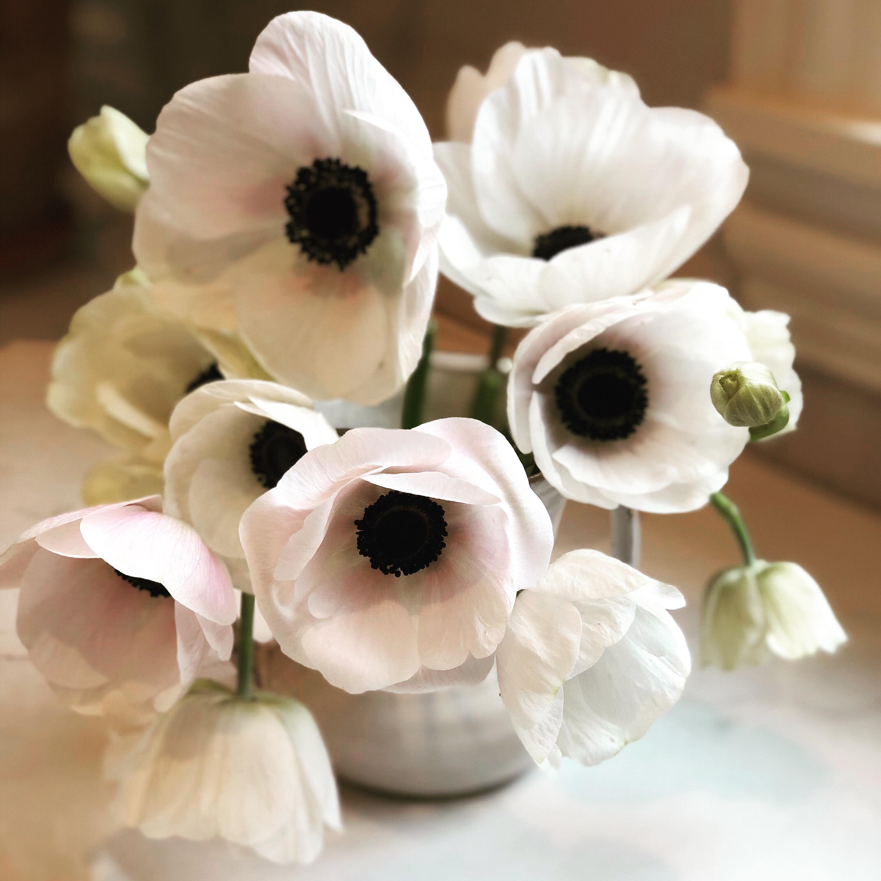 Anenomes in Vase