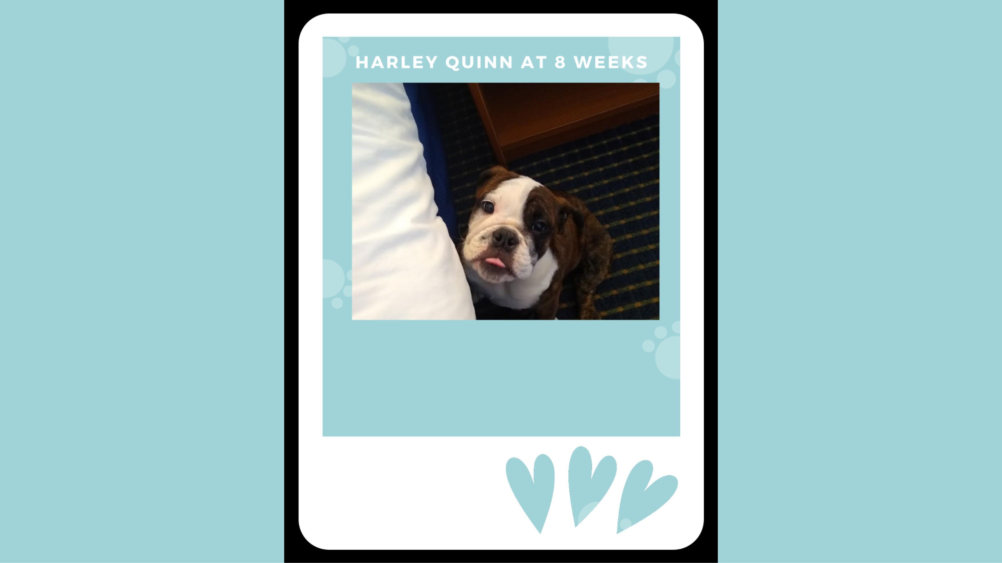 quin_8weeks