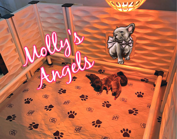 Molly's Angels
