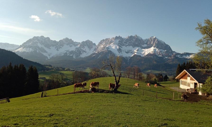 Kuhweide Oberellenbach.jpg