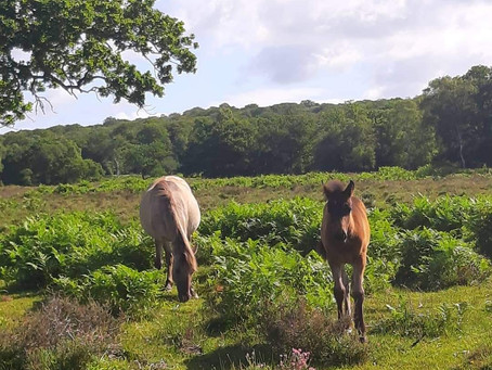 What we should know when visiting The New Forest.