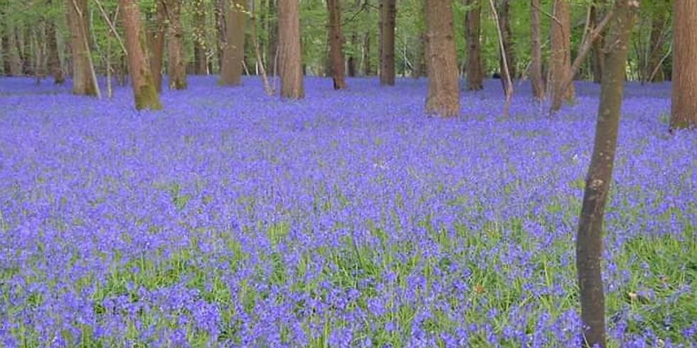 *FULLY BOOKED* Walking through full swing of spring!
