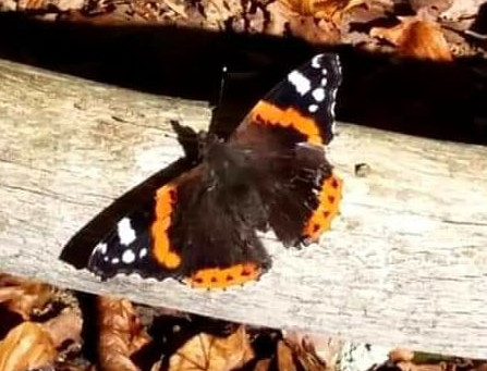 Butterflies in the New Forest.