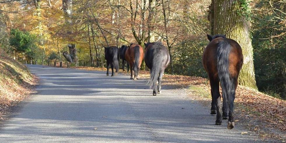 Autumn guided walk.