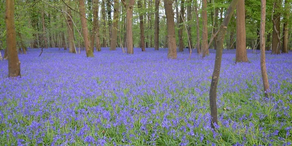 Bluebells and beer.