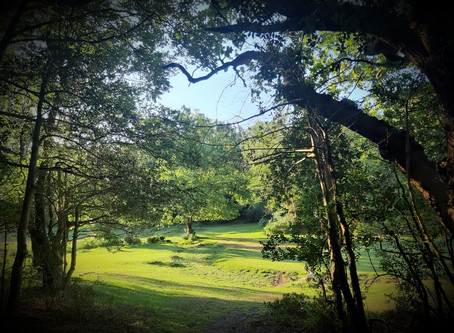 Guided walks in the New Forest.