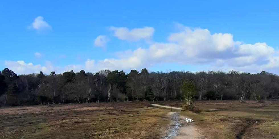 Brockenhurst circular walk.