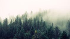 מדיטציית התמקדות בנשימה