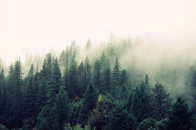 Misty Woodland