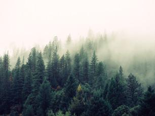 Into the dark woods