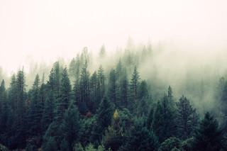 Découvrir le Sequoia National Park