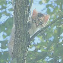cat%2520in%2520tree_edited_edited.jpg