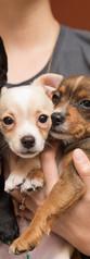 FureverBuddiesPuppies8536sak.jpg