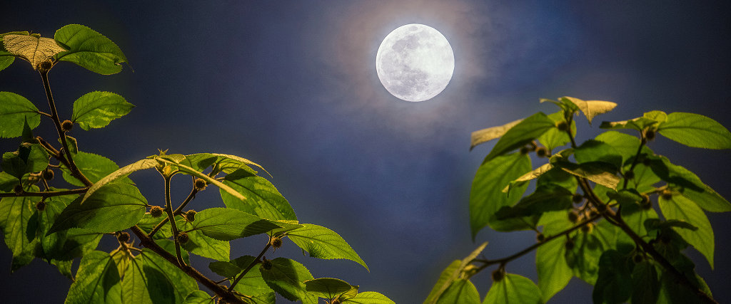 Full Moon of Spring by Jef Dai
