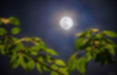 MoonSpringDai_1024crop.jpg
