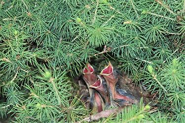 Baby Birds Vermont