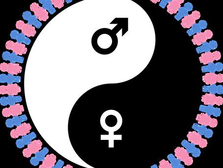 ♂ Du masculin au féminin ♀ et réciproquement