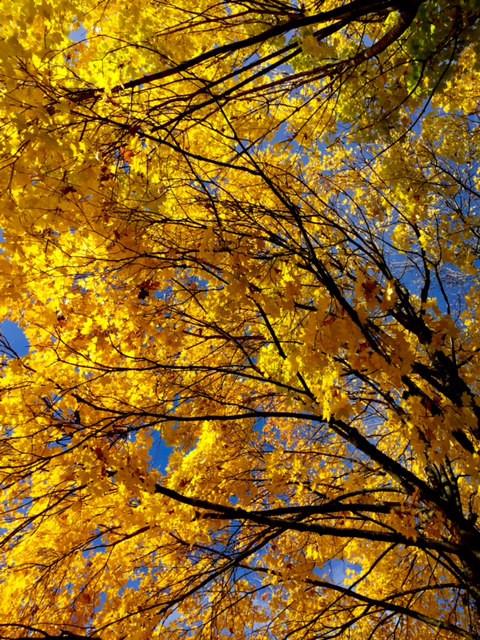 Laufinstinkt+ Oktober-Impressionen '15 L